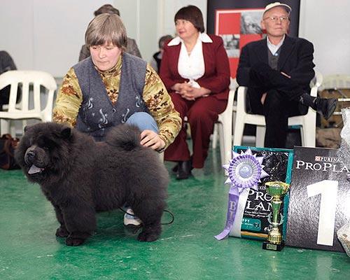 Knyaz rus ot laskovogo solntsa, black dog